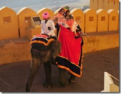 DSC03941_Elephant